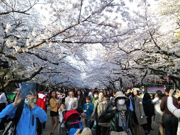 外国人観光客で溢れかえる上野公園のお花見客