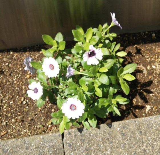 電柱の傍らには可憐な花が咲いていました